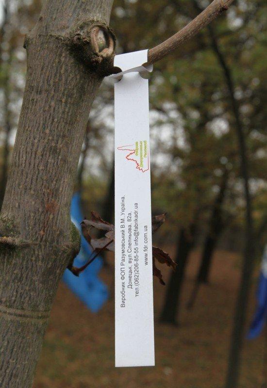 Дончане вышли на субботник под знаменами регионалов и в голубых партийных жилетах (фото), фото-5