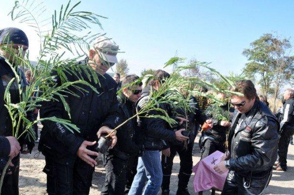 Байкеры вместе с мэром Симферополя высадили аллею акаций (фото), фото-3