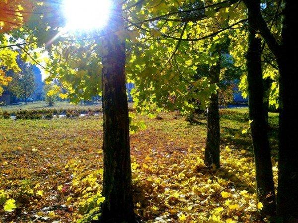 Тернопіль. Осінь. 2011р., фото-2
