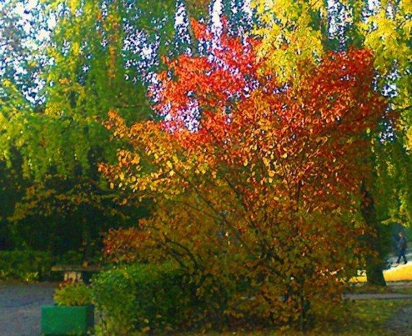 Тернопіль. Осінь. 2011р., фото-3