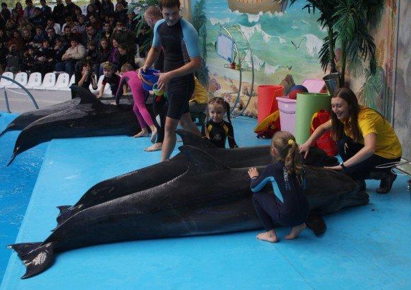 Как дельфины в Донецке лечили детей (фото), фото-3