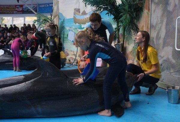 Как дельфины в Донецке лечили детей (фото), фото-4