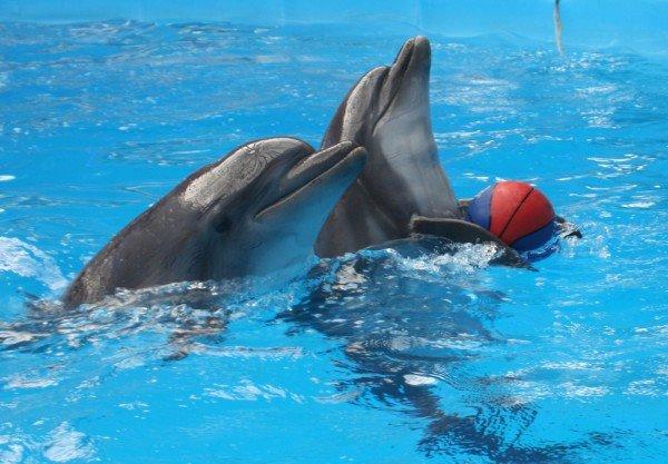 Как дельфины в Донецке лечили детей (фото), фото-5