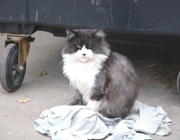 Несколько крупных микрорайонов Николаева рискуют оказаться в завалах мусора (ФОТО), фото-4