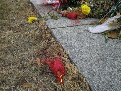 У пам'ятника Леніну в Полтаві потроху крадуть квіти (фотофакт), фото-3