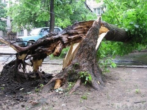 На Волині внаслідок шквальних вітрів дерево впало на проїжджу частину, фото-1