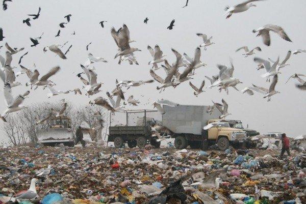 Журналіст провів ніч на сміттєзвалищі під Тернополем (фото), фото-2