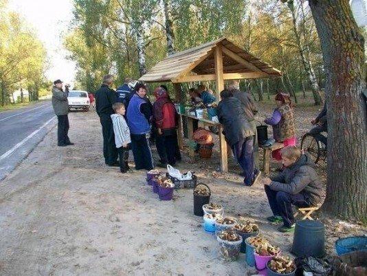 «Дешевше грибів» -  підприємець сплатить  за фіктивні операції з дарами лісу півмільйона гривень, фото-1