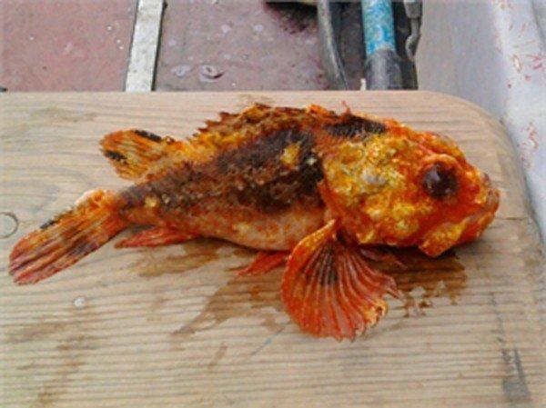 В Крыму поймали рыбу-мутанта (ФОТО), фото-1