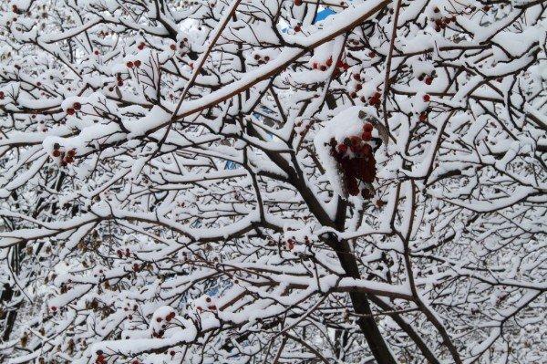В Донецке совсем недавно была зима (фото), фото-5