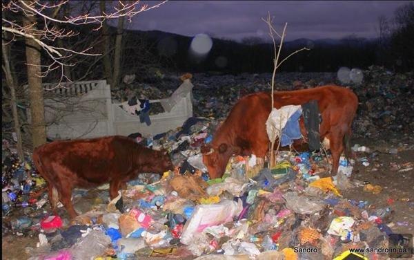 Фотофакт: крымских бомжей потеснили коровы, фото-1