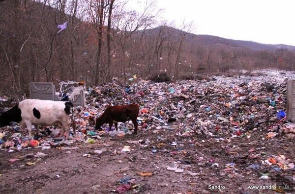Фотофакт: крымских бомжей потеснили коровы, фото-2