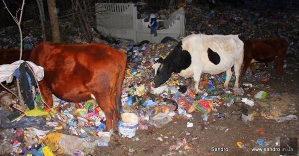 Фотофакт: крымских бомжей потеснили коровы, фото-3