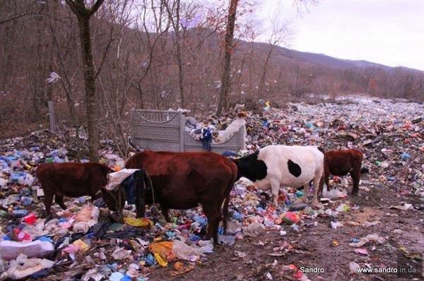 Фотофакт: крымских бомжей потеснили коровы, фото-4