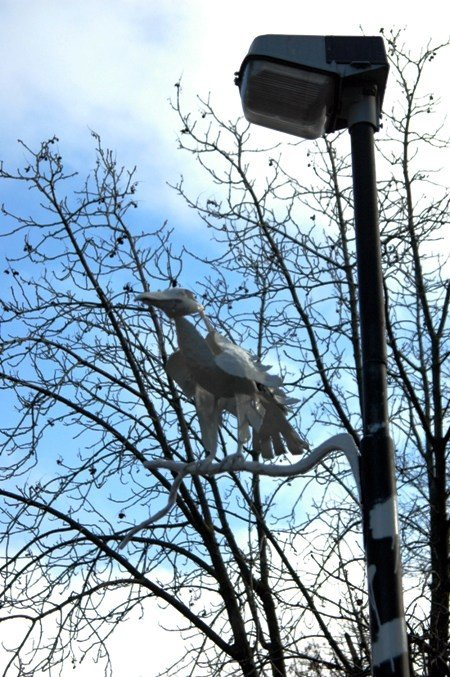 В Симферополе прижилась белая ворона (фото), фото-2