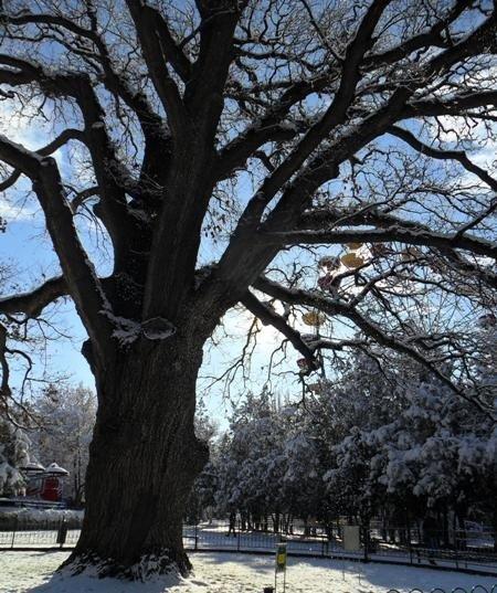 Зимняя сказка в Симферополе (фото), фото-10