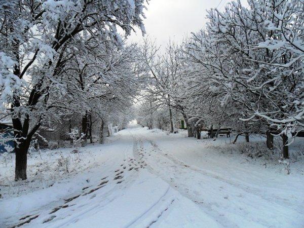 Зимняя сказка в Симферополе (фото), фото-2