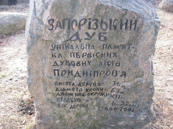 ФОТОРЕПОРТАЖ: Чиновники пилят Запорожский дуб, фото-1