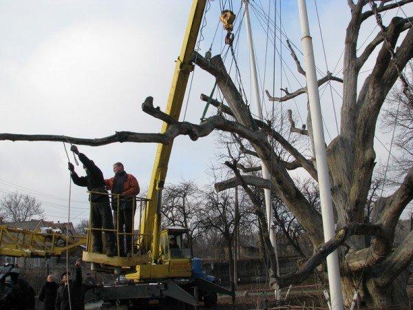 ФОТОРЕПОРТАЖ: Чиновники пилят Запорожский дуб, фото-3