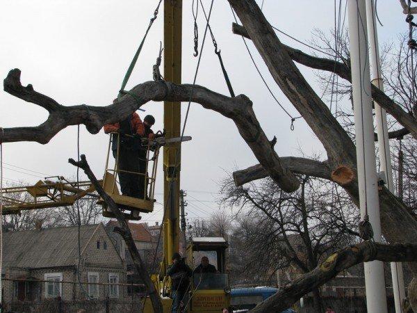 ФОТОРЕПОРТАЖ: Чиновники пилят Запорожский дуб, фото-5