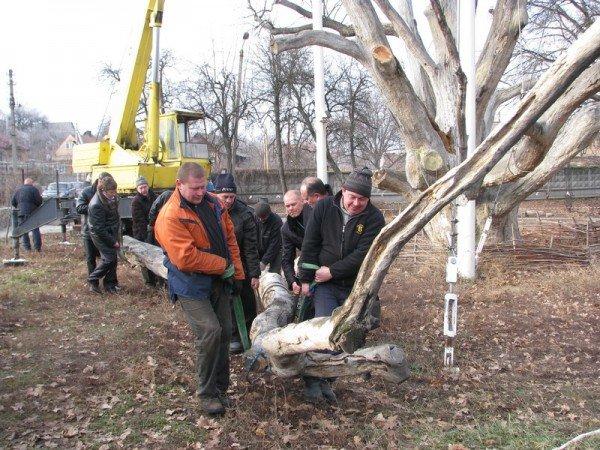 ФОТОРЕПОРТАЖ: Чиновники пилят Запорожский дуб, фото-6