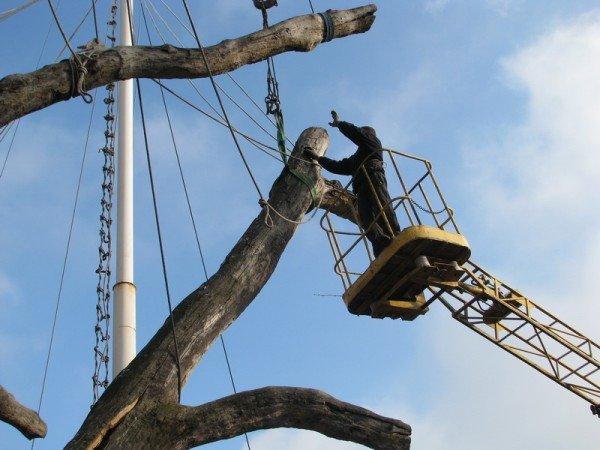 ФОТОРЕПОРТАЖ: Чиновники пилят Запорожский дуб, фото-7