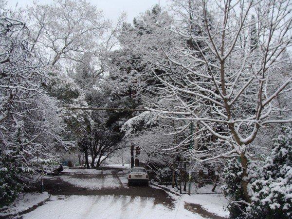 В Ялте зима уже закончилась (ФОТО), фото-7