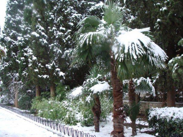 В Ялте зима уже закончилась (ФОТО), фото-10