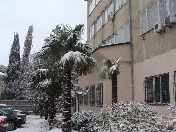 В Ялте зима уже закончилась (ФОТО), фото-9