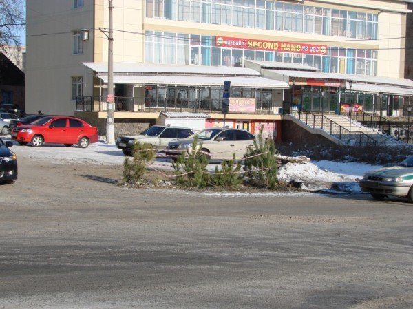 В центре Артемовска из асфальта выросли... елки!, фото-2