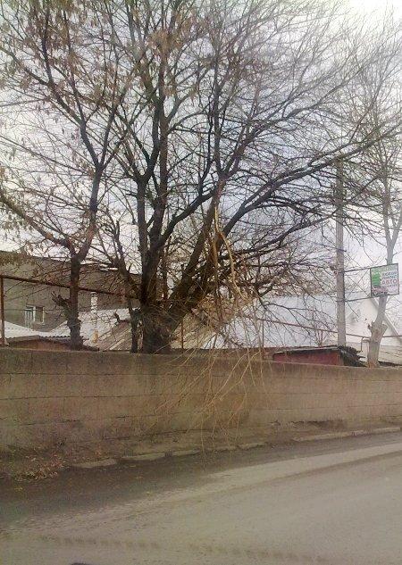 Фотофакт: Сломанная ветка заставляет симферопольских водителей нарушать ПДД, фото-2