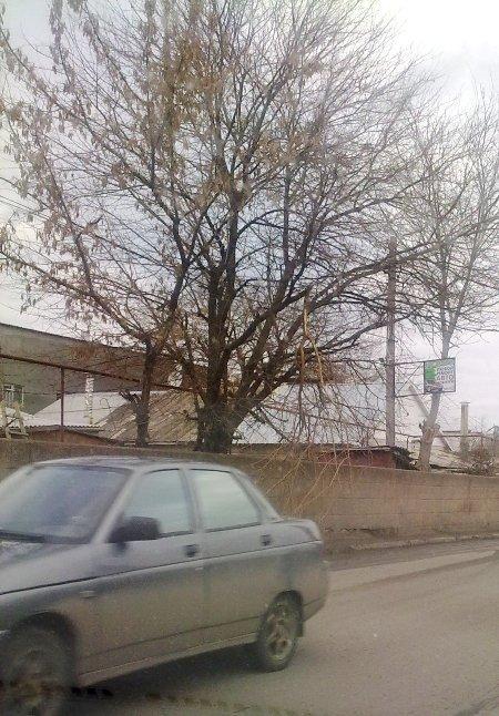 Фотофакт: Сломанная ветка заставляет симферопольских водителей нарушать ПДД, фото-3