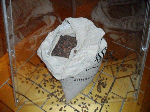 Симферопольцев научат отличать настоящий шоколад от поддельного (фото), фото-1