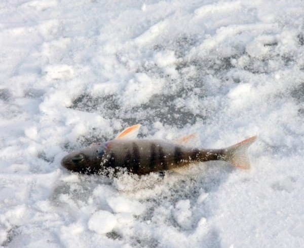 На донецкие водоемы вышли любители зимней рыбалки (фото), фото-1