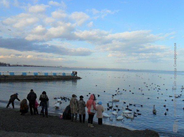 Феодосийцы приручают лебедей хлебом (фото), фото-6