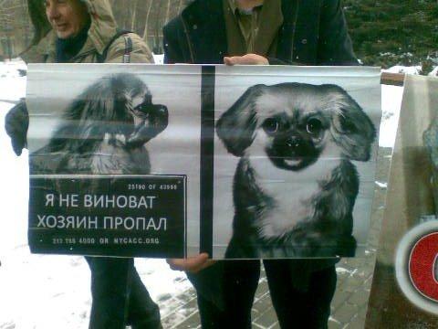 Горловчане на митинге в Донецке требовали от Шишацкого прекратить зоофашизм, фото-4