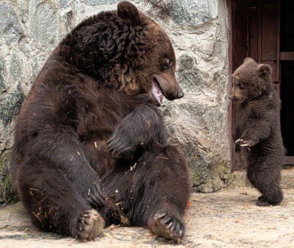 Симферопольская медведица показала, как надо воспитывать детей (фото), фото-3