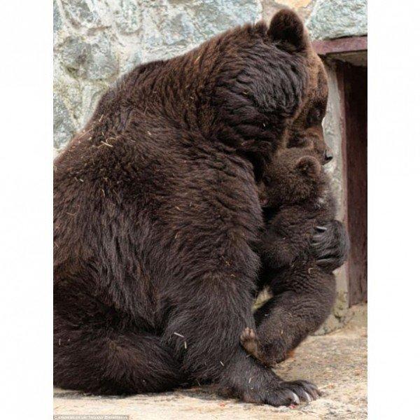 Симферопольская медведица показала, как надо воспитывать детей (фото), фото-4