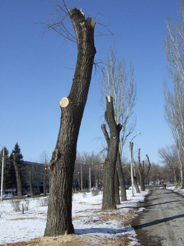 В Донецке вырубили парковую аллею, чтобы расчистить место для  автопарковки (фото), фото-1
