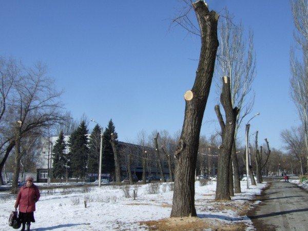 В Донецке вырубили парковую аллею, чтобы расчистить место для  автопарковки (фото), фото-2