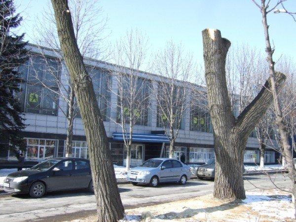 В Донецке вырубили парковую аллею, чтобы расчистить место для  автопарковки (фото), фото-3