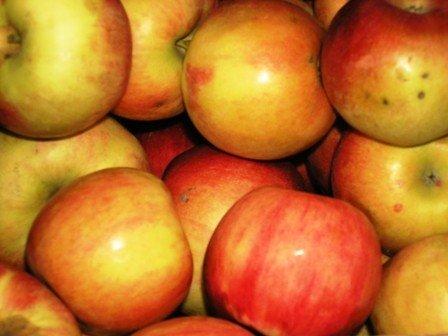 Вчера в Горловку прибыли фуры с яблоками от Шишацкого, фото-3