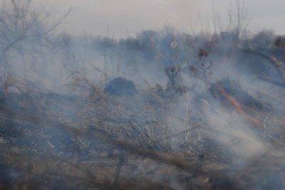 На Львівщині через спалювання минулорічного листя горять торф'яники та гектари сухої трави, фото-10