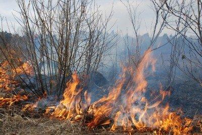 На Львівщині через спалювання минулорічного листя горять торф'яники та гектари сухої трави, фото-1