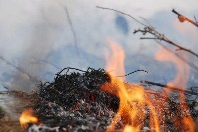 На Львівщині через спалювання минулорічного листя горять торф'яники та гектари сухої трави, фото-4