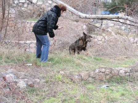 В центре Севастополя спасли собаку, 2 недели просидевшую в глубокой шахте, фото-5