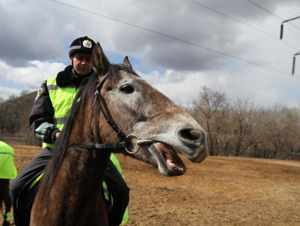Донецкая милиция оседлала Барона и Волшебника (фото), фото-9