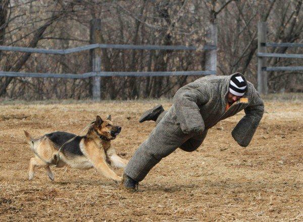 Донецкая милиция оседлала Барона и Волшебника (фото), фото-10