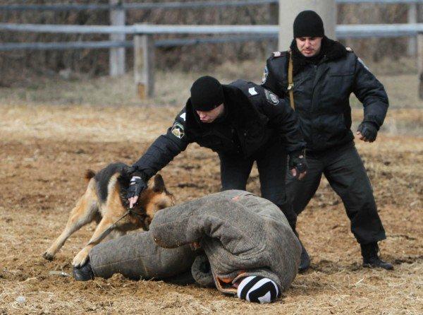 Донецкая милиция оседлала Барона и Волшебника (фото), фото-11