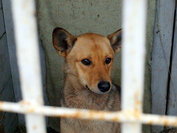 В Харькове  центр для бездомных собак  «проглотит» 14,5 миллиона гривен (ФОТО), фото-3